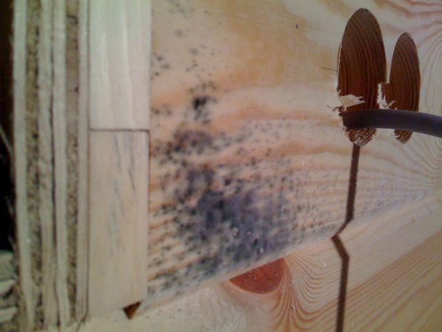 bautrockner und holzseife kampf dem bl uepilz schimmel im holzhaus blockhaus. Black Bedroom Furniture Sets. Home Design Ideas