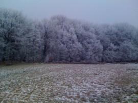 Gartenbau im Winter