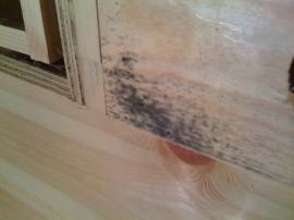 Wasserschaden im Holzhaus mit Bläueschimmel